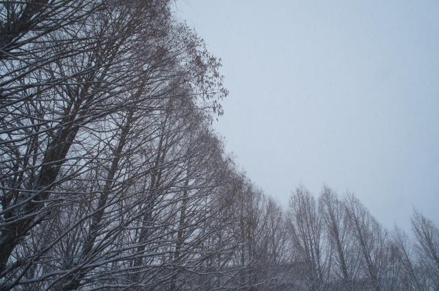 image_gray02