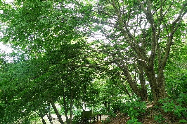 image_green01